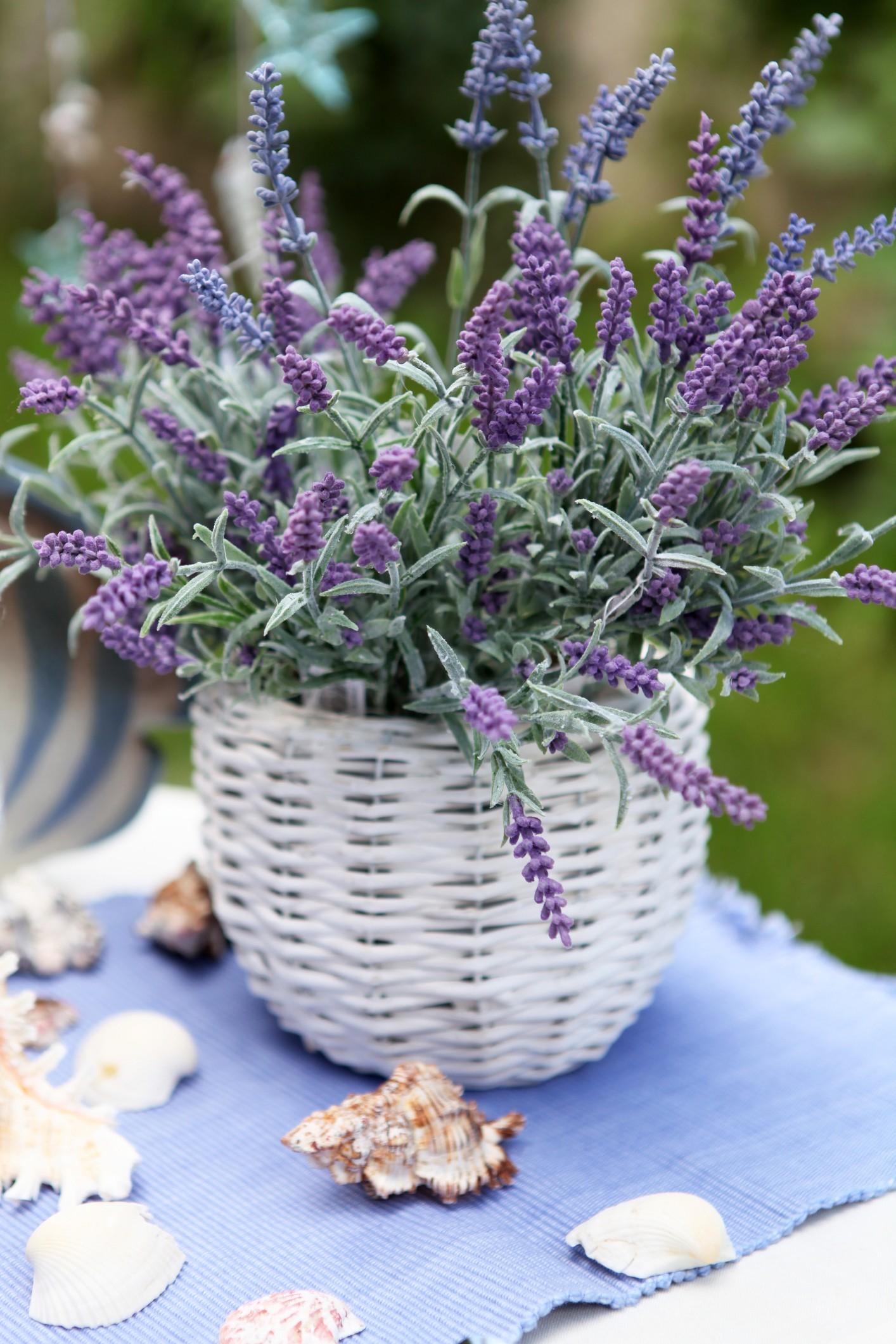 InnoGreen puutarhasuunnittelu, pihasuunnittelu, kesäkukat