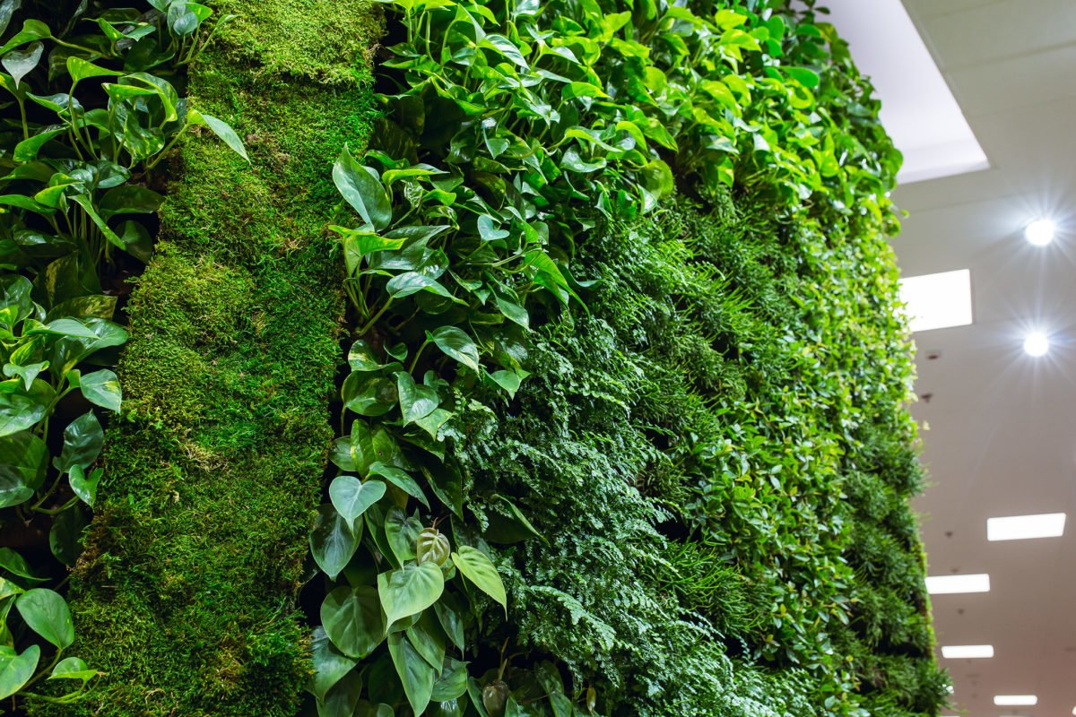 innogreen green wall
