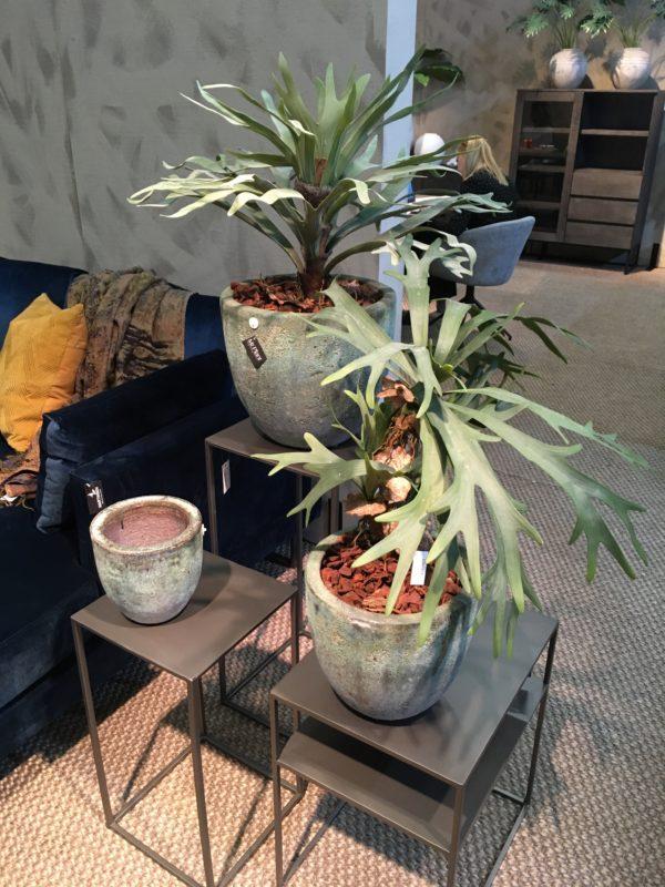 innogreen ruukku silkkikasvi