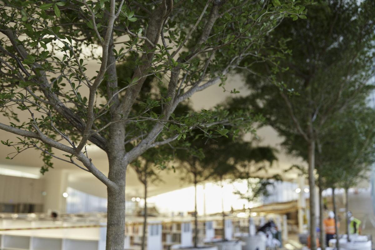 oodi innogreen istutus puut